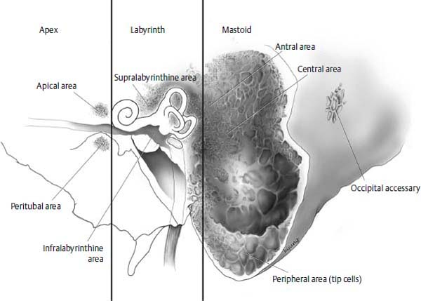 Anatomy And Embryology Of The Ear Ento Key