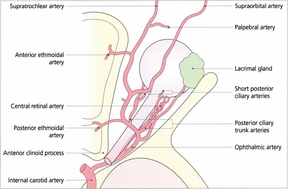 The Orbit and Lacrimal System | Ento Key