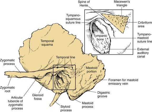 Mastoid bone anatomy