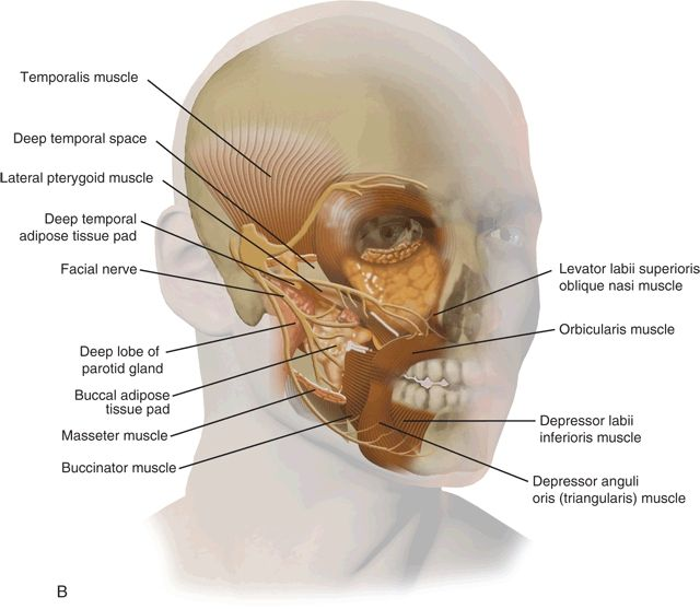 Preauricular Approach To The Infratemporal Skull Base Ento Key