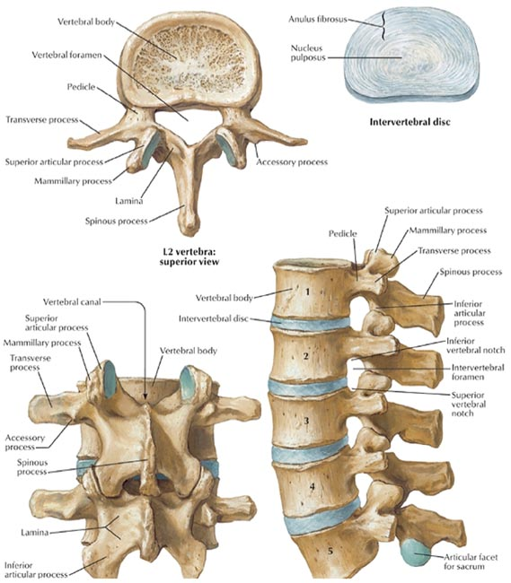 Applied Anatomy And Percutaneous Approaches To The Lumbar Spine