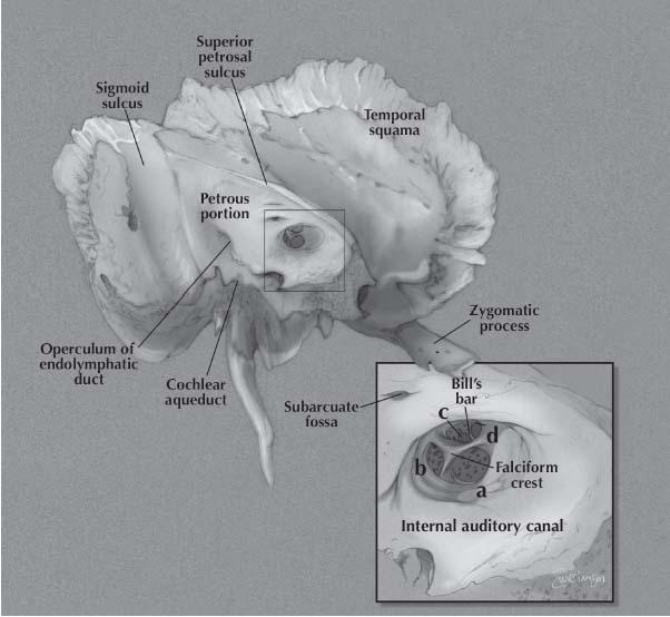 Landmark location facial nerve