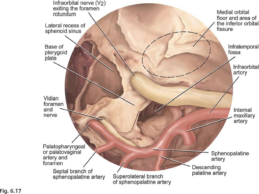 Vistoso Infratemporal Fossa Anatomy Imágenes - Anatomía de Las ...