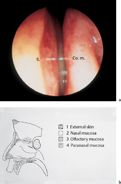 Endoscopic Anatomy Of The Nose And Paranasal Sinuses